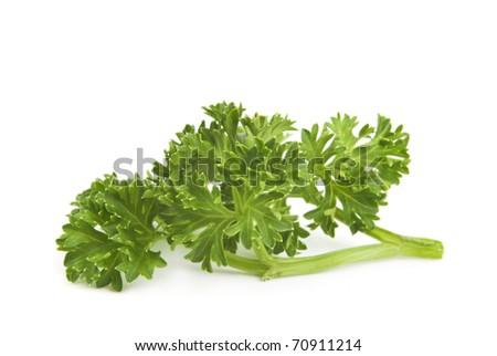 parsley on white background - stock photo