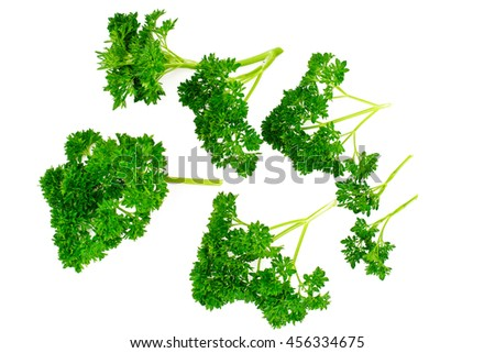 Parsley on White Background Studio Photo