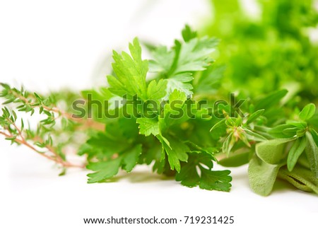 Parsley, Rosemary, Lettuce leaf, fresh herbs on blurred background