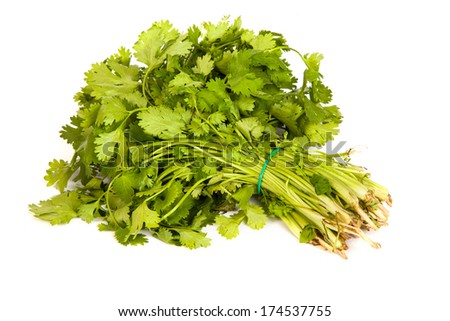 Parsley tied in a bunch with twine, isolated on white background - stock photo