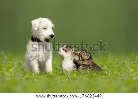 Parson Jack Russell Terrier puppy with two little kittens in a green meadow - stock photo