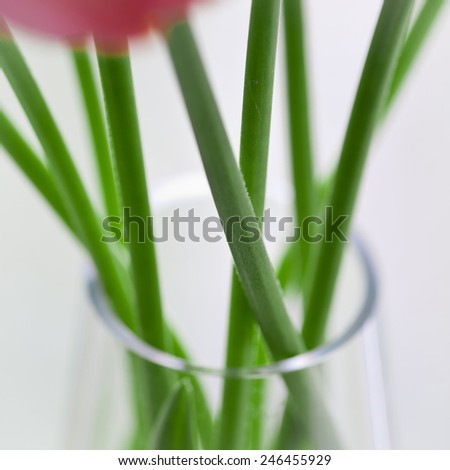 Part 2 (middle) of vertical composition with three square photos with red tulips - stock photo