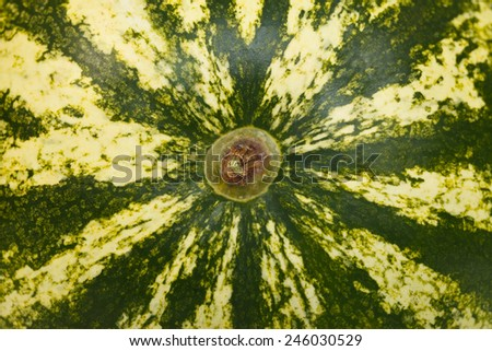 Part of a big green watermelon, closeup view - stock photo