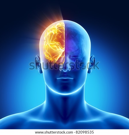 Part of brain - right HEMISPHERE - stock photo