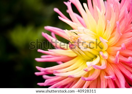 Part of Flower Closeup - stock photo
