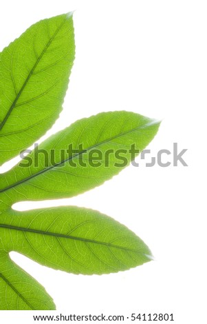 Part of green leaf on isolated white