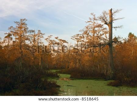 Part of Lake Martin swamp on a fall morning, near Breaux Bridge, Louisiana. - stock photo