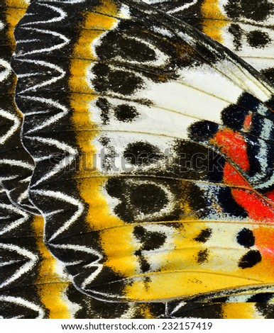 Part of Leopard Lacewing butterfly's wing with sharp in details - stock photo