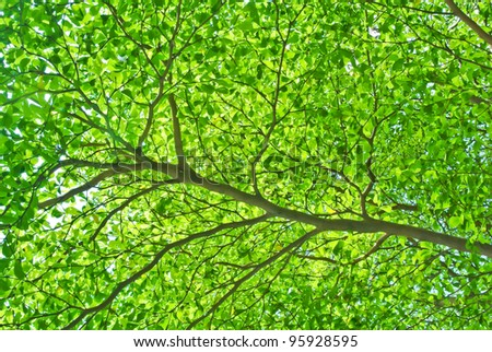 part of tree branch and leaf - stock photo