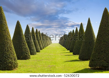 Parterre or conical hedges lines and lawn from Versailles Chateau. France - stock photo