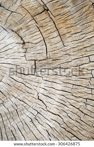 Partial Cross Section of a Old Decaying Cotton Wood Tree Showing Tree Rings and Cracks - stock photo