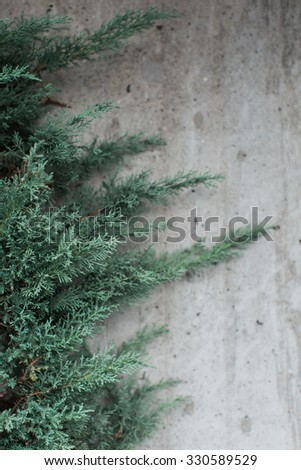 Partial view of the branches and foliage of an evergreen fir tree against a textured wall background in vertical format