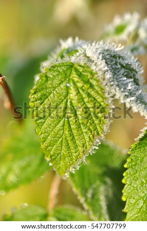 partially frozen leaf with ice crystal formations macro