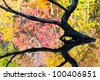 Partially sunken tree silhouette and colorful fall foliage reflected in a lake's still mirror surface. - stock photo