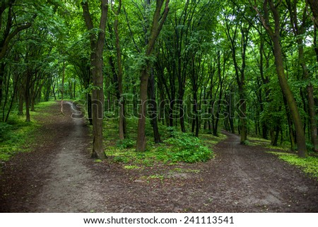 Parting of the ways in a green summer forest. - stock photo
