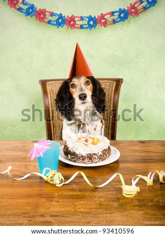 Party dog sitting behind his cake