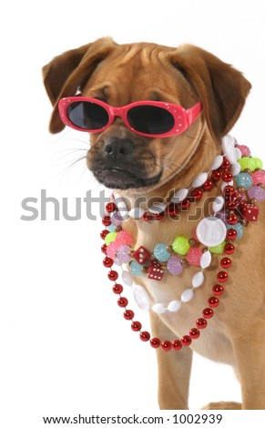 Party Lola - stock photo