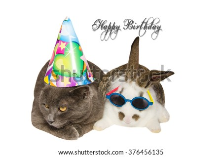 Party pets with funny cat and bunny. Happy birthday card with animals isolated on white background.