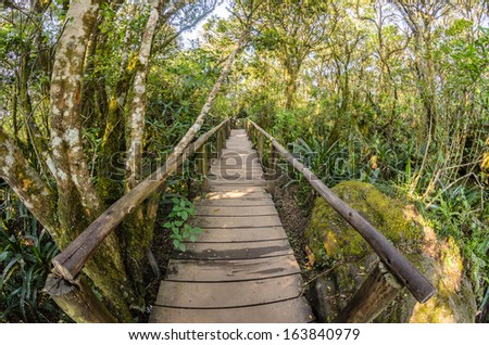 Passage through  a rainy forest in South Africa - stock photo
