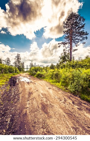 Passing through the forest road to the lake. Image in the yellow-purple toning - stock photo