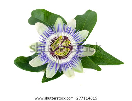 passion flower isolated on white - stock photo