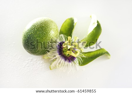 Passion flower (passiflora incarnata) and maracuja fruit isolated over white with water drops - stock photo