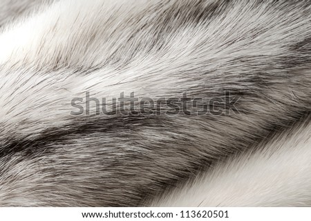 Pastel black cross mink fur texture close-up background - stock photo