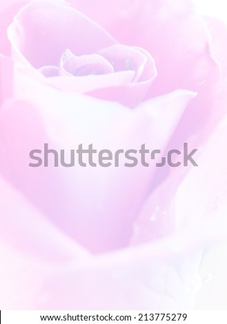 Pastel color rose in soft and blurred style for background