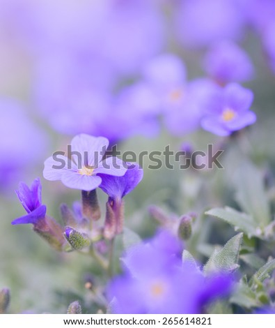 Pastel colored photo of wild flowers