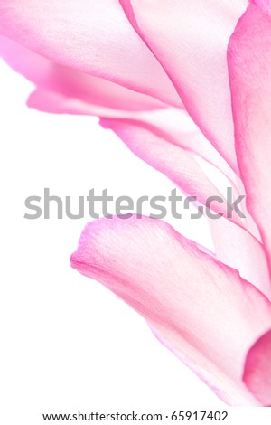 Pastel colored pink floral border, selective focus - stock photo