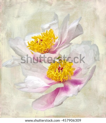 Pastel oil painting of Japanese peonies isolated on white background