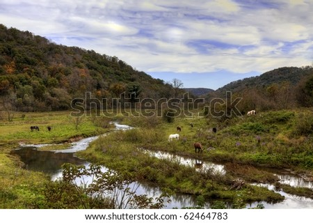 Pastoral scene of horses grazing near a stream on a beautiful day in autumn.