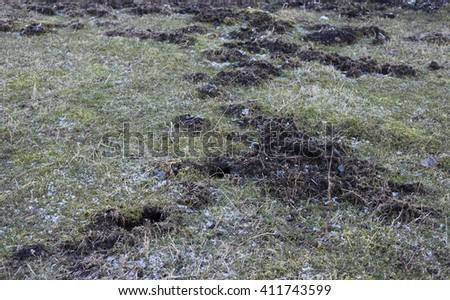Pasture at early spring, damaged by water voles. Photographed at Helgeland arhipelago, Norway, where vole population increased enormously at many islands in 2015. - stock photo