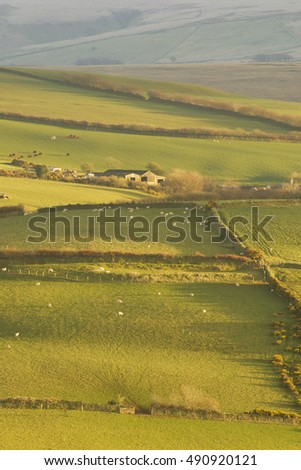 Pasture at Exmoor national park