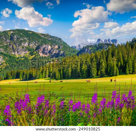 Pasture for horses in National Park Tre Cime di Lavaredo. Dolomites, South Tyrol. Location Auronzo, Italy, Europe. - stock photo