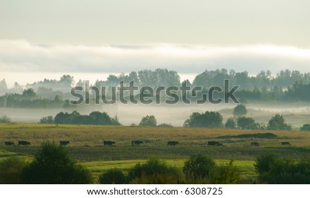 Pasture in the morning - stock photo