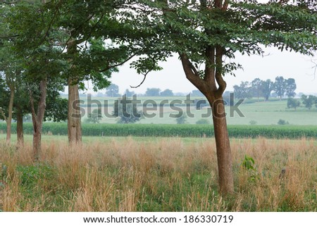 Pasture of tall dried grass on summer morning - stock photo
