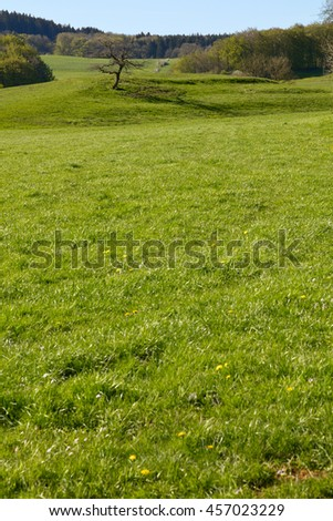 Pasture with a lone tree near the village Schwirzheim, Rheinland-Pfalz, Germany. - stock photo