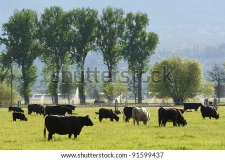 Pasture with grazing cows - stock photo