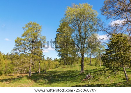Pasture with newly blossomed trees in springtime - stock photo