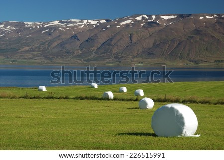 Pasture with packed hay rolls in dusk. It's autumn in Iceland - stock photo