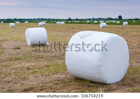 Pasture with packed hay rolls in  dusk. It's summer in the Netherlands. - stock photo