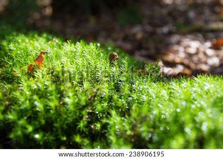 Patch of bright lit moss in a forest - stock photo