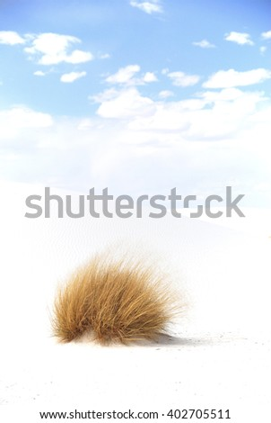 Patch of dry grass on dune in White Sands National Park, New Mexico, U.S.A. - stock photo