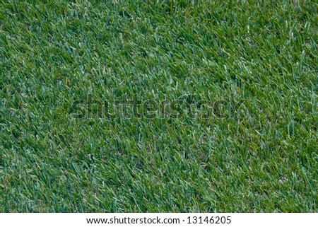 Patch of grass for use as background texture