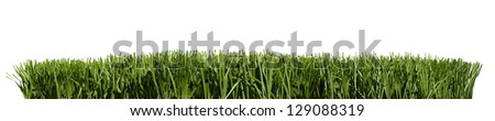 Patch of green grass edge design element - stock photo
