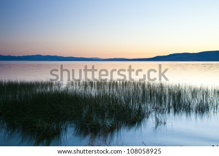 Patch of Reeds at Dusk on Lake - stock photo