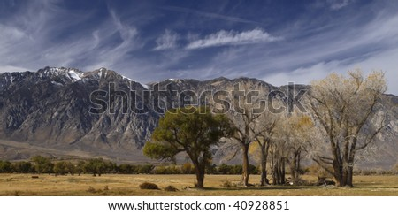 patch of trees with the californian sierra nevada in the background,on the way to yosemite valley,fall 2009. - stock photo