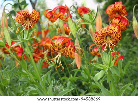 patch of unique orange and yellow flowers - stock photo