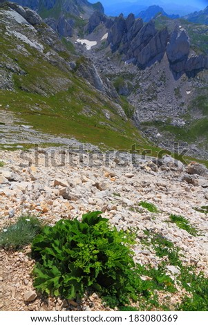 Patches of green vegetation on scree covered mountain valley - stock photo